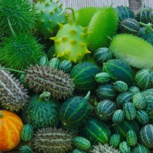 Concombre décoratif varié