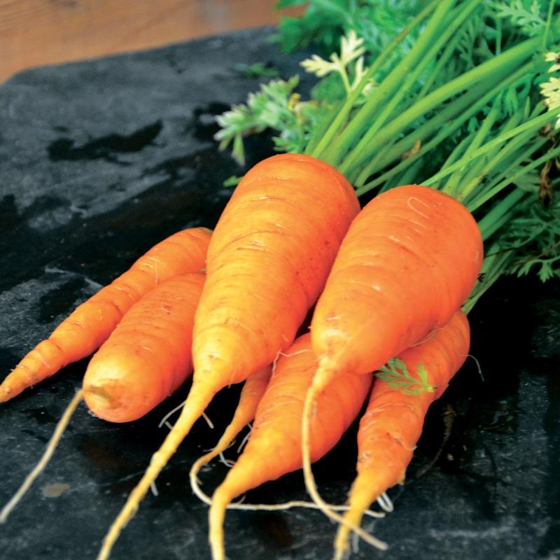 Duo de carottes présemé bio