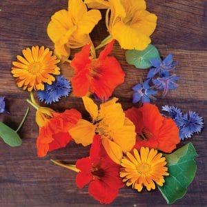 Fleurs comestibles en melange preseme bio