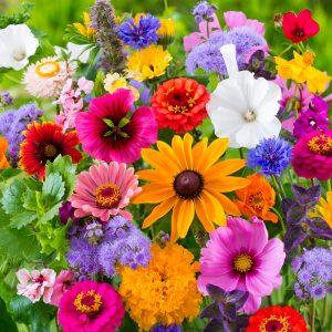 Fleurs en mélange ceuillette estivale