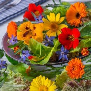 Fleurs en mélange comestibles bio