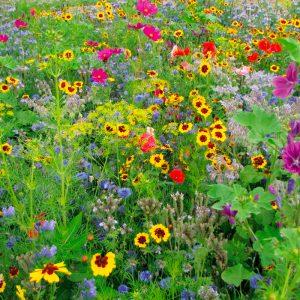 Fleurs en mélange miel et papillons