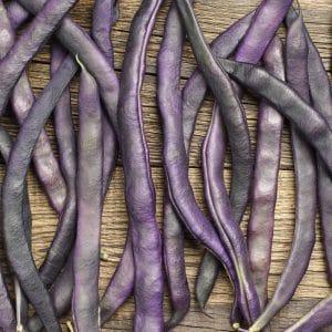 Haricot nain mangetout Purple Teepee bio