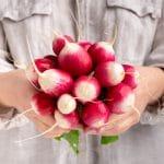 Radis rond rose à bout blanc (National 2)