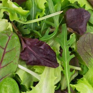 Salade Mesclun D' Automne variée