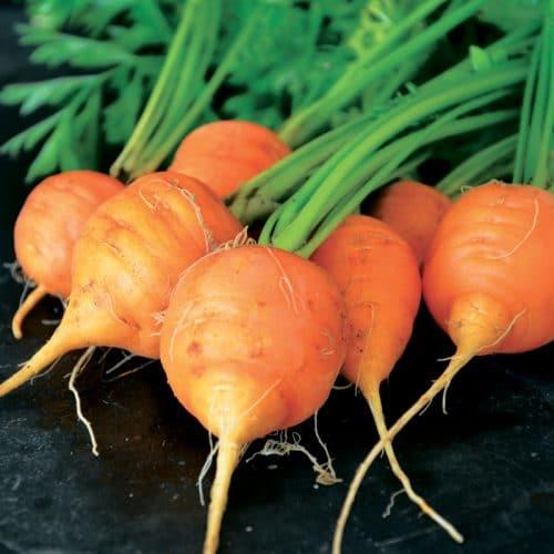 Trio de carottes présemé bio