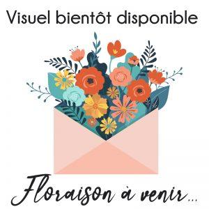 Narcisse Pluriflore Grand Soleil D'Or